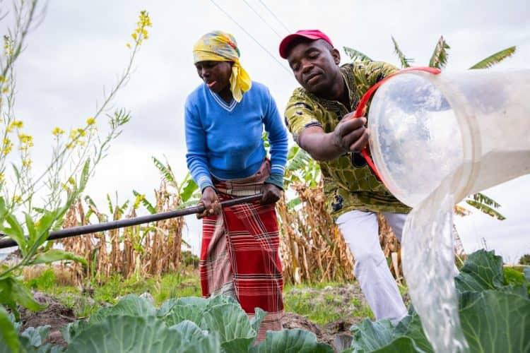 Thulamahashe agriculture