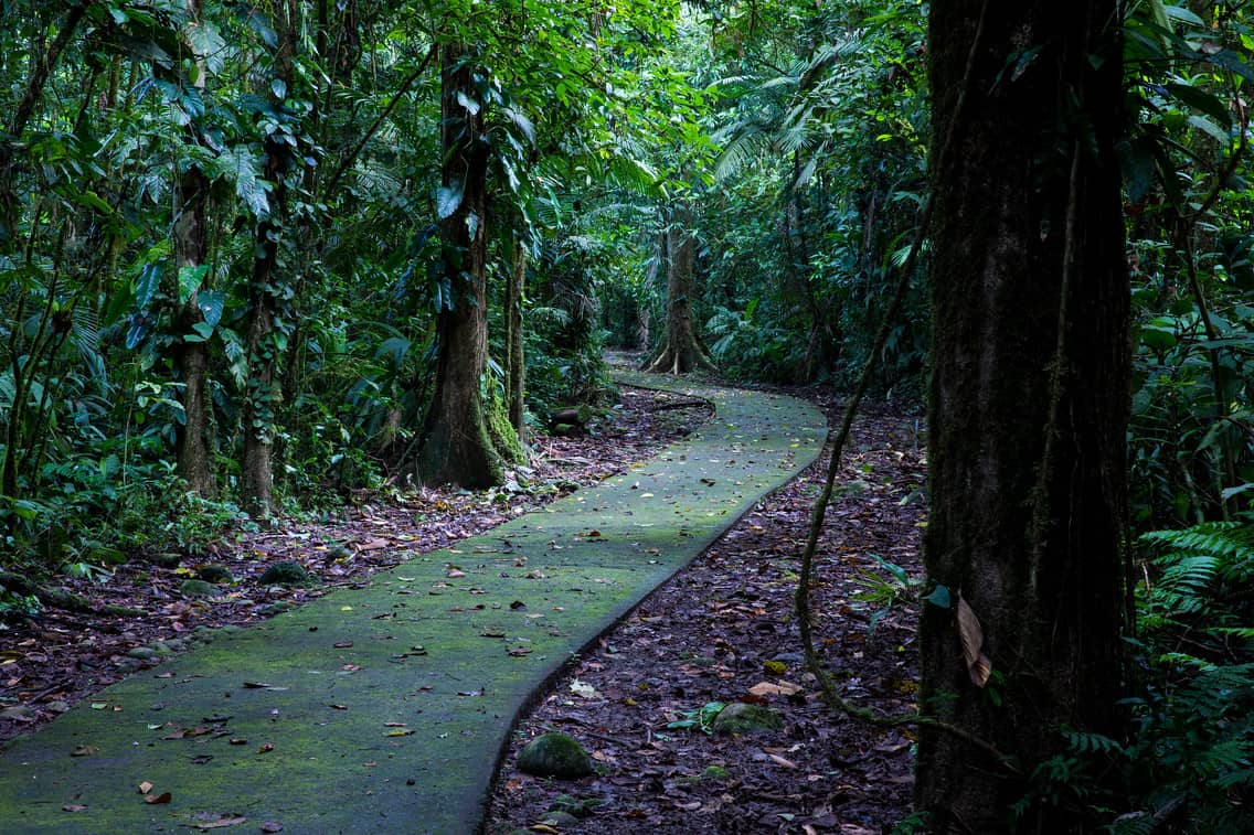 La Selva Research Station Organization For Tropical Studies