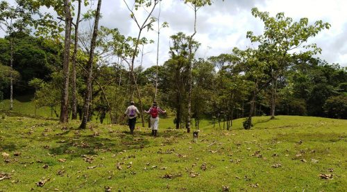 Proyecto Valores: Promoting Sustainable Forests at La Selva