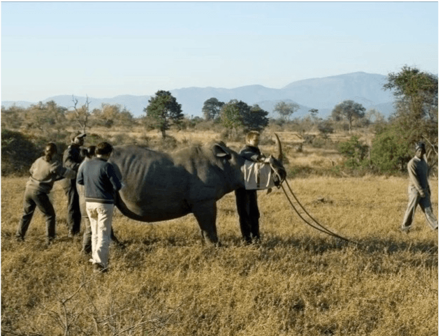 rhino blindfold